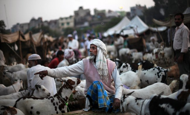 A livestock merchant is surrounded by goats as he waits for customers ahead of the Muslim festival