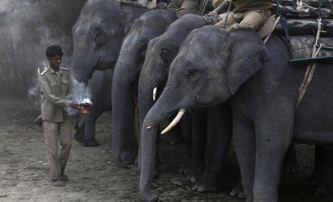 A mahout worships elephants before the start of elephant safari for tourists inside the Kaziranga...