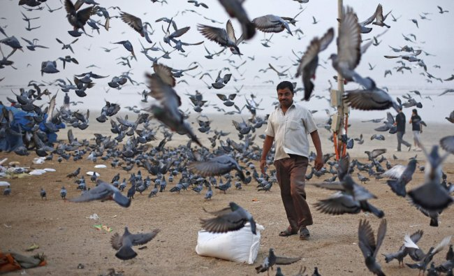 A man selling lentils as feed for pigeons walks on a beach along the Arabian Sea in Mumbai...