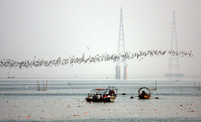 A flock of seagulls fly past Hindu pilgrims on boats at Sangam in Allahabad on November 20, 2012.