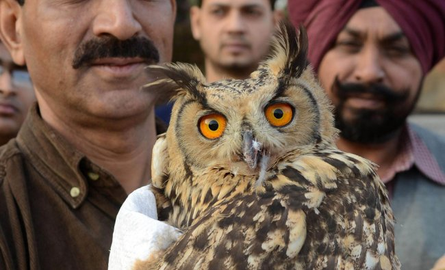 The Indian Society for the Prevention of Cruelty to Animals (SPCA) inspector Ashok Joshi holds a...