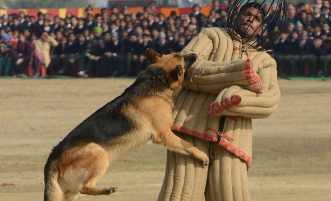 An Indian Army K9 unit performs a demonstration drill during an Army Mela (fair) and exhibition...