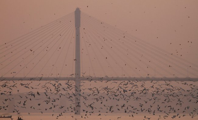 Seagulls fly as Indian people ride a boat at Sangam, the confluence of Rivers Ganges Yamuna...
