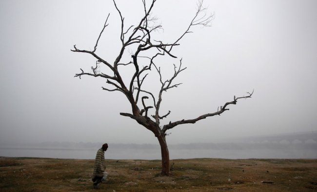 An Indian man walks near a tree on the banks of the river Yamuna on a cold and foggy morning...