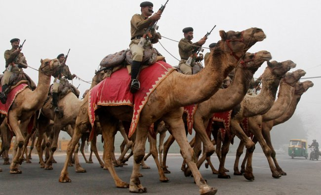 India\'s Border Security Force (BSF) soldiers ride their camels as they rehearse for the Republic Day