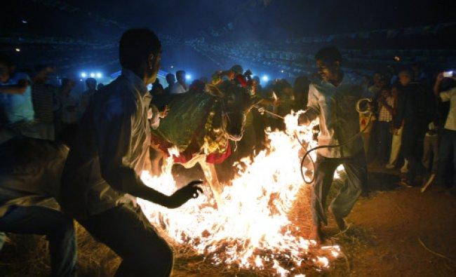 Hindu men make a decorated cow jump over fire as part of \'Makar Sankranti\' celebrations...