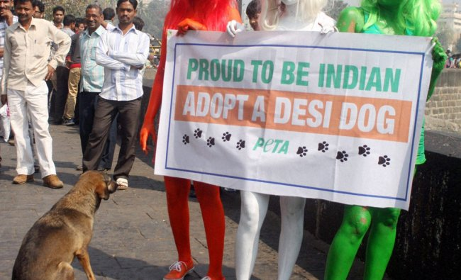 Girls, with their bodies painted in the colours of the Indian flag, holding a banner at a campaign