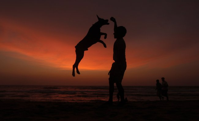 A boy plays with his pet on a beach as the sun sets in Colombo.