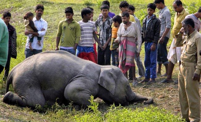 Villagers surround the body of a wild elephant found near fields in Gajoldoba...