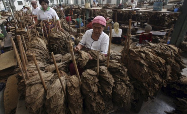 Workers sort cured Deli tobacco leaves that will be packed and shipped to Bremen, Germany...