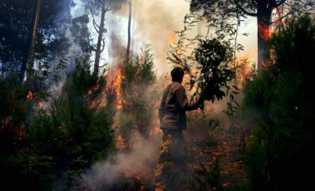 Forest fire errupts in Arambi forest near Ooty on Sunday...