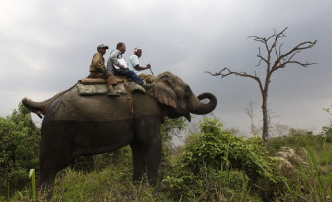Forest officials atop an elephant look for rhinos after crossing a stream during a rhino census...