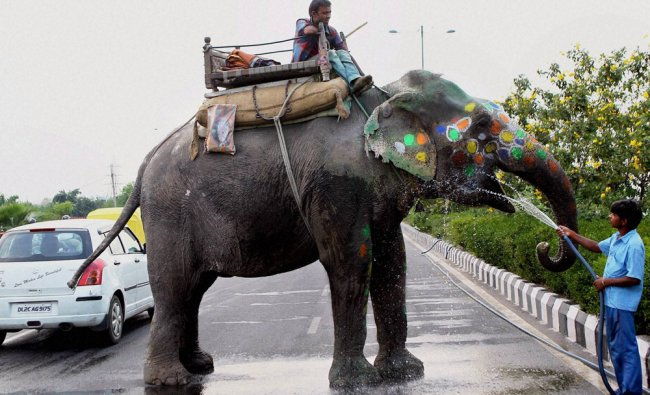 A boy quenching thirst of an elephant with a water pipe at a roadside in New Delhi ...