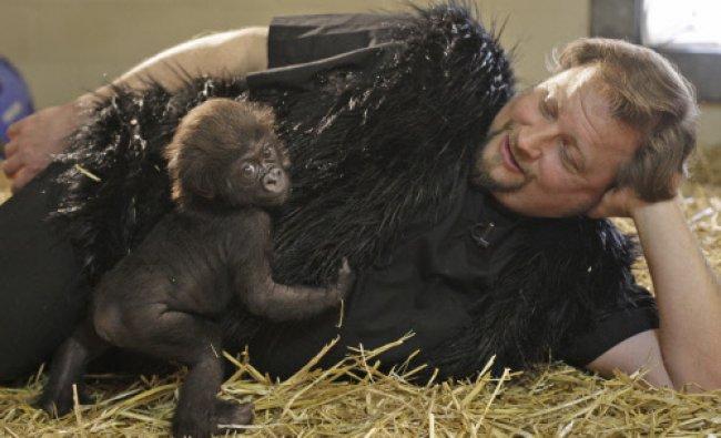 Cincinnati Zoo & Botanical Garden Primate Team Leader Ron Evans works with 2 month-old \'Gladys\'...