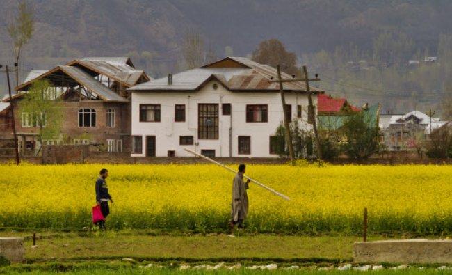 Men walk through a mustard field on the outskirts of Srinagar...