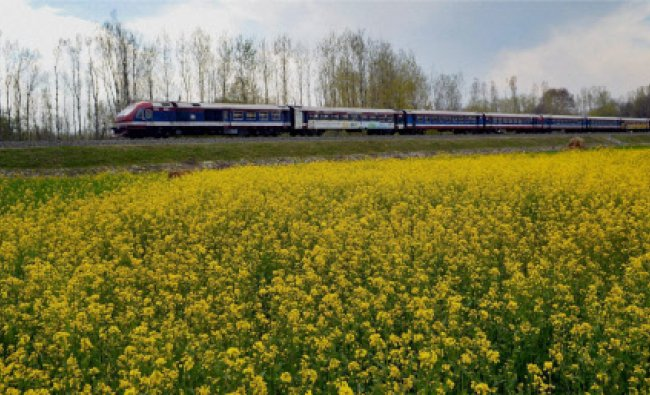 Train in Kashmir runs from North to South through full blooming mustard fields and picturesque...
