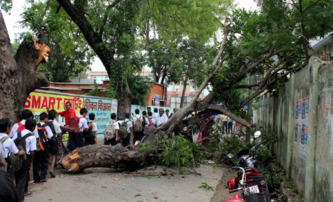 Balurghat: A tree is uprooted following the Friday night\'s cyclonic storm at Balurghat in South...