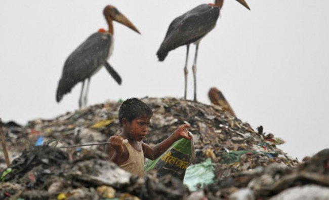 A scavenger, surrounded by a flock of Greater Adjutant birds, collects plastic for recycling