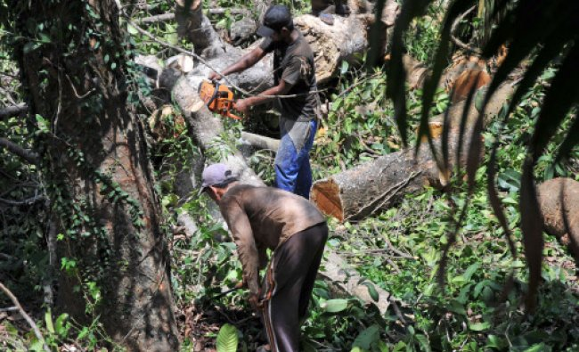 When world is celebrating Environment day on one side, it was ironic to notice that woodcutters...