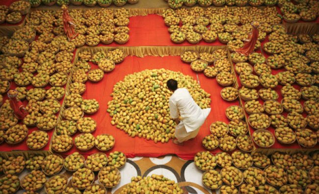 A priest arranges mangoes to be offered to Lord Krishna inside a temple during a mango festival...