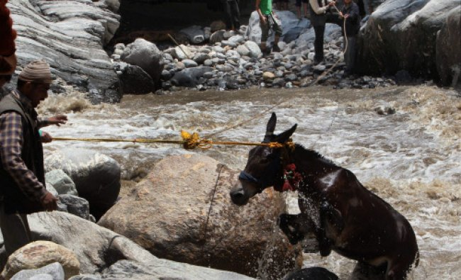 People rescue a pony from Mandakini river at Gauri Kund on Friday after flood and landslide...