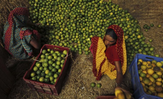 Laborers sort sweet limes at a wholesale market on the outskirts of Allahabad...