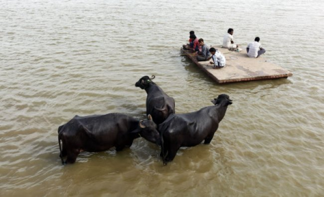 People fish on the roof of a building, submerged in the rising waters of the River Yamuna...