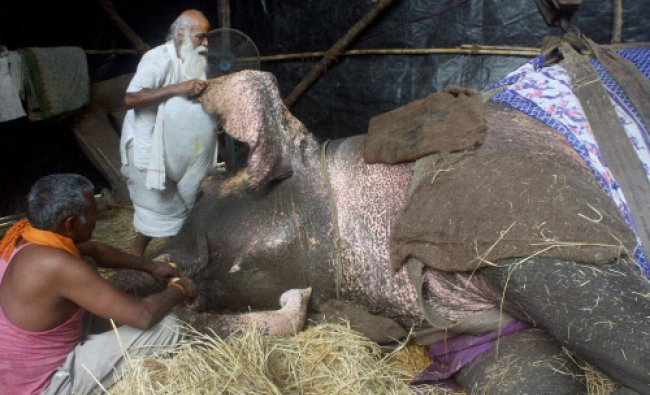 Caretakers of Bijli, the ailing elephant, trying to save her life in Mulund, Mumbai on Friday.