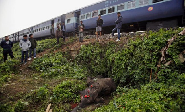 People stand near the body of a dead elephant as a train passes by near Deepor Beel wildlife...