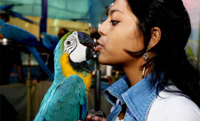 A bird lover with macaw during a bird show in Kolkata on Tuesday. PTI Photo