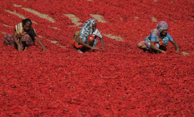 Women sort red chillies to dry at Shertha village in the western Indian state of Gujarat...