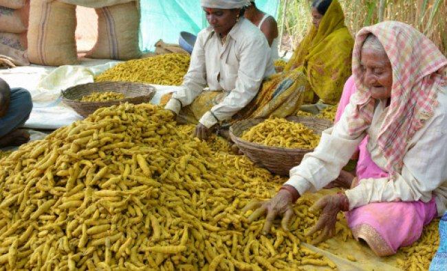 Farmers sort turmeric after polish in Karad, Maharashtra on Wednesday...