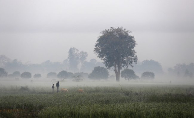A man and a boy walk with their pigs in the morning mist at an agricultural field...