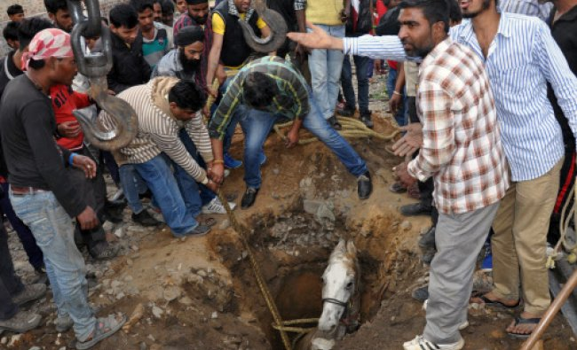 Volunteers help extract a horse that fell into a pothole in Jalandhar. Horses are still commonly...