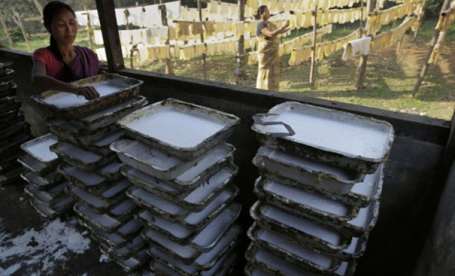 Daily wage laborer Jina Boro, 35, arranges latex tapped from rubber tree onto trays at a rubber...