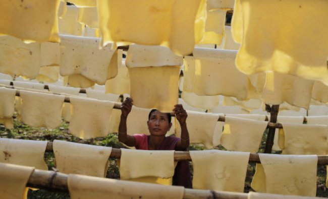 Daily wage laborer Jina Boro, 35, hangs rubber sheets to dry at a rubber farm in Hatikhuli...