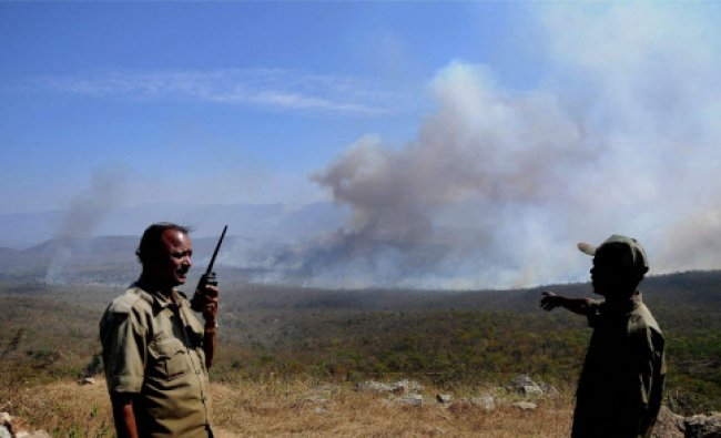 Forest officials at work after a fire broke out at Bandipur National Park in Karnataka...