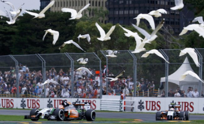 A flock of bird flies above Force India Formula One cars during the qualifying session...
