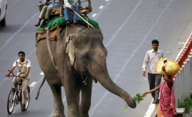 A woman feeds an elephant on a street of New Delhi...