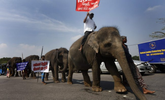 An owner of tamed elephants holds up a placard as he joins a march mounted on an elephant...