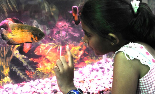 A girl admires the rare species of fish displayed at an exhibition in Bengaluru ...