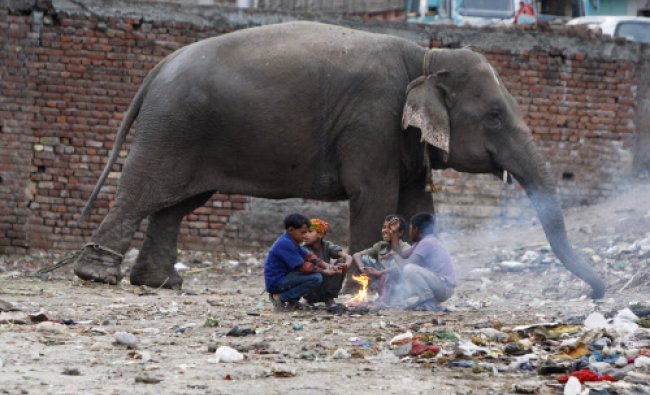 An elephant stands chained near children sitting around a makeshift bonfire at a shanty area...
