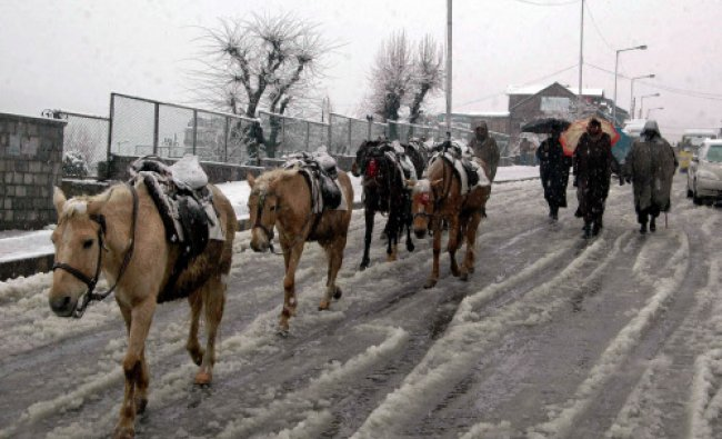 Nomads with their mules walk on a snow covered road in Phalgam...