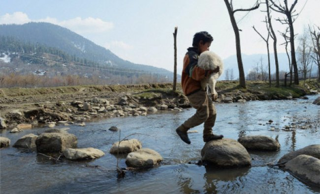 A child carrying a lamb crossing a stream at Daksum, Anantnag district...