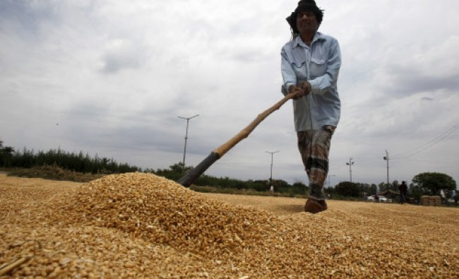 A labourer spreads wheat for drying at a wholesale grain market...