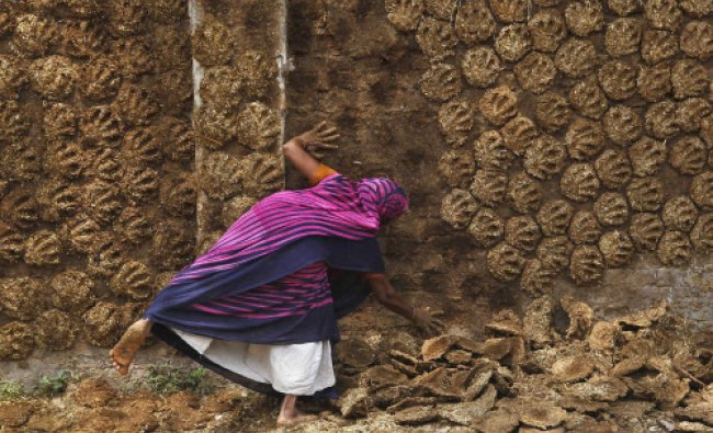 A woman pastes cow dung cakes on a wall for drying in the northern Indian city of Allahabad...