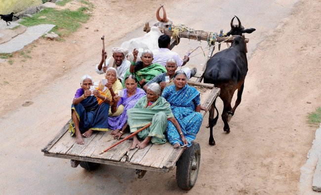 Senior citizens being carried on a bullock cart for casting votes for Lok Sabha polls near ...