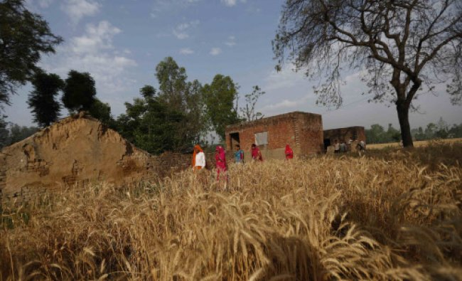 Women walk through a wheat field on their way to a polling station to cast their votes...