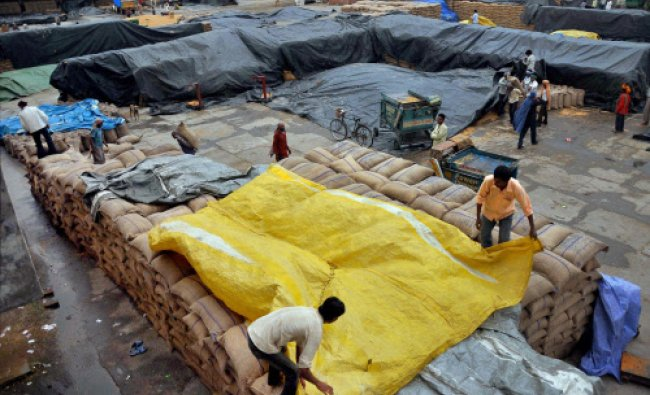 Farmers covering the paddy sacks after heavy rains in Patiala...