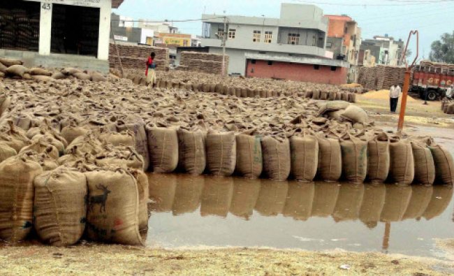 Wheat sacks getting spoilt as they have been put in open after heavy rain at Hodal anajmandi...